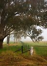 Rural misty moment ... by Rosalie Dale