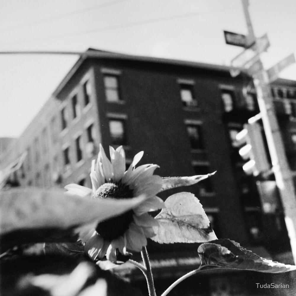 City Sunflower by Tuda Sarian
