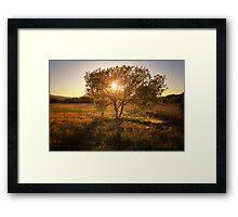 Tree 'O' Gold Framed Print