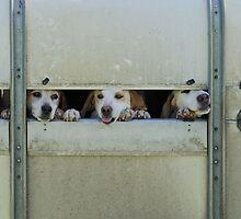 Dogs by JEZ22