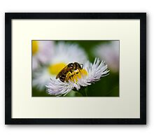 Honey Processor Framed Print
