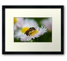 Honey Processor Framed Print