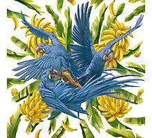Hyacinth Macaws and Bananas Stravaganza Photographic Print
