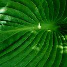 Green Funnel by eyeland