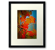 Brixton Cottage on Leura Park - autumn leaves Framed Print