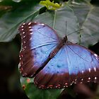 Butterfly by LeightonM1