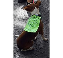 Dog's Protest Photographic Print