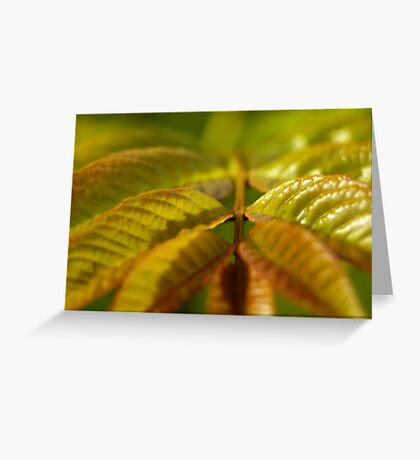 Ash Tree Leaves Greeting Card
