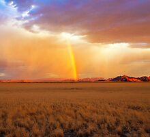 Lighting up the Desert by Jill Fisher