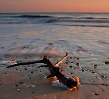 Driftwood by Great North Views
