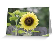 Silky Yellow Sun Greeting Card