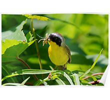 Common Yellow Throat Visits All You Can Eat Buffet Poster