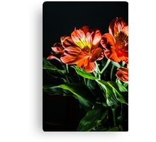 Dark lined flowers Canvas Print