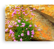 Clinging To The Rocks Metal Print