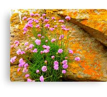 Clinging To The Rocks Canvas Print