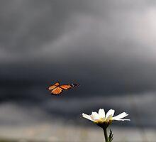 Stormy Landing by EmilyJFineArt