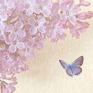 Lilac by shalisa