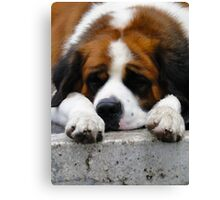 The Dog Days Of Summer Canvas Print