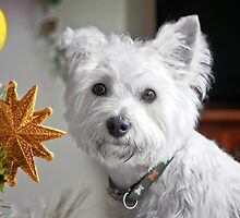 Christmas Star Puppy by Terri Waters