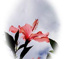 Hibiscus Beauty by Al Bourassa