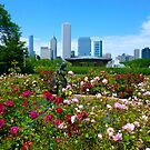 Chicago Park View by Jonathan  Green