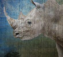 White Rhino by Linda Sparks