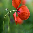 A splash of red by Mandy Disher