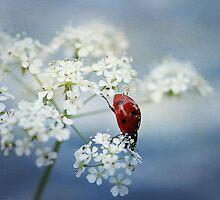 Ladybird.... by Ellen van Deelen