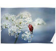 Ladybird.... Poster