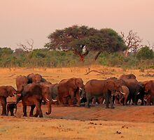 Glorious morning by Explorations Africa Dan MacKenzie