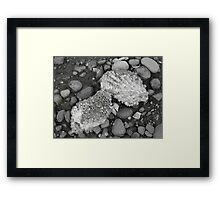 Oysters Anyone?  'Yes' Free-Load the Barnacles Framed Print