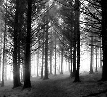 Can't see the Mist for the Trees by Chris Pilcher