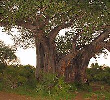 Tree hugger! by Dan MacKenzie
