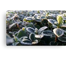 Cold, Icy Cleveleys Morning Canvas Print