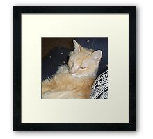 Sleepy Cat Framed Print