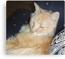 Sleepy Cat Canvas Print