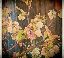 Blueberry Blossoms by Catherine Restivo
