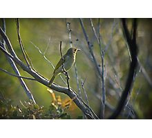 Another little bird in the National Park Photographic Print