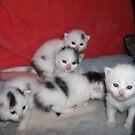 Jinglefritz's kittens by stirlingacre