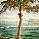 Palm by Keri Harrish