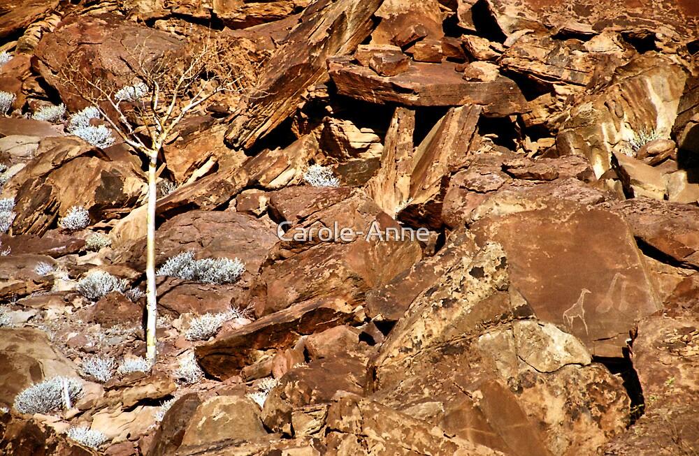 Lone Tree & Rock Engravings, Twyfelfontein by Carole-Anne