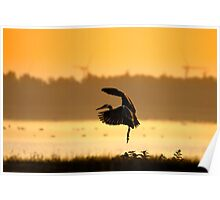 Great Blue Heron in early morning Poster
