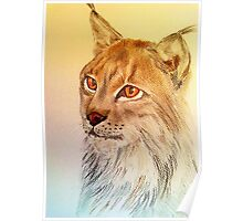Beautiful Lynx Poster