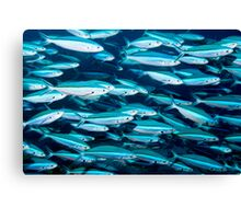 Fish in Blue Canvas Print