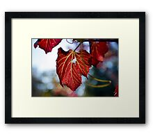 Autumn Leaves... only a few Red ones left Framed Print