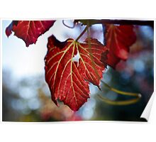 Autumn Leaves... only a few Red ones left Poster