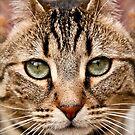 A Cheshire Cat ? by BillyKrueger