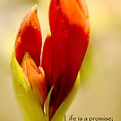 the promise by lensbaby