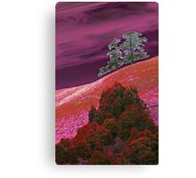 Red Hill Pines Canvas Print