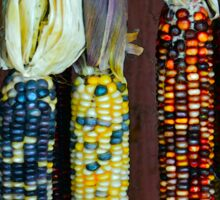 Colorful Indian Corn Sticker